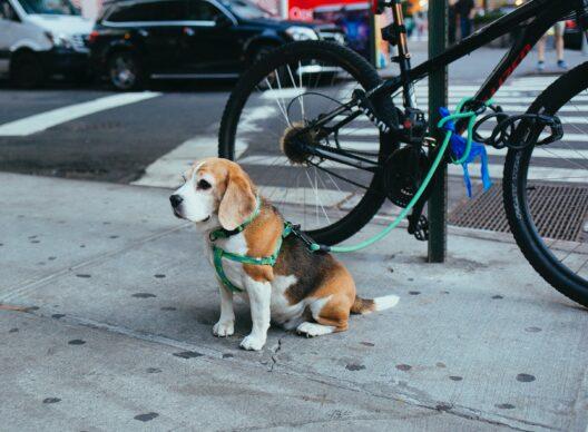 Nuisance: dog poo