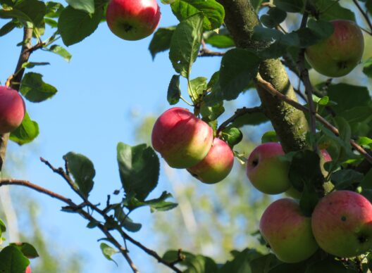 Fruit trees: pick up your order